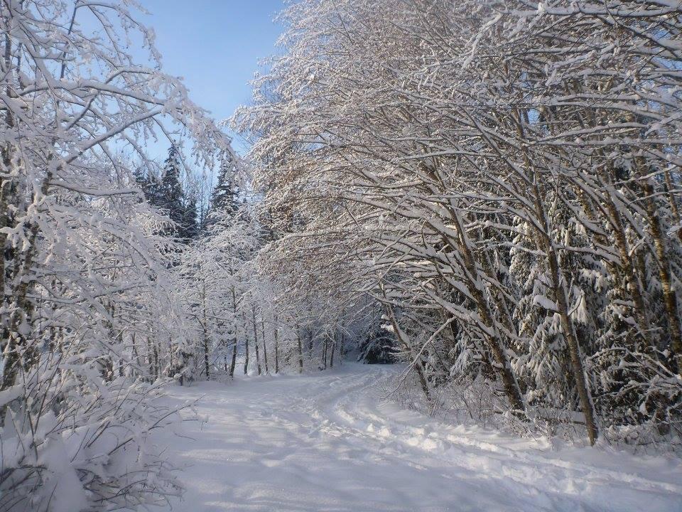 snowshoeing-hirsch-creek-kitimat-hanging-trees